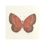Butterfly I Premium Giclee Print by Sophie Golaz