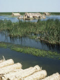 Reed Mats Ready for Sale, Village Near Qurna, Iraq, Middle East Photographic Print