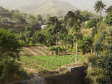 Agriculture, Santiago, Cape Verde Islands, Africa Photographic Print by  R H Productions