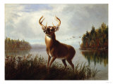 Eight Point Stag Giclee Print by William Bradford