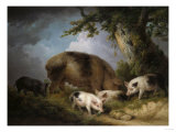 A Sow and Her Four Piglets in a Wooded Landscape Reproduction procédé giclée par Henry Thomas Alken