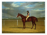 The Racehorse 'The Colonel' with William Scott Up Giclee Print by Federico Ballesio