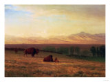 Buffalo on the Plains, Circa 1890 Posters by Sir William Beechey