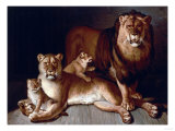 A Pride of Lions Giclee Print by Edward S. Curtis