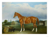 A Chestnut Hunter and a Spaniel by Farm Buildings Giclee Print by Federico Ballesio