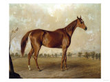 Asteroid at Stud, 1870 Giclee Print by Giovanni Battista Benvenuti
