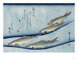 Rivertrout', from the Series 'Collection of Fish' Giclee Print by Ando Hiroshige