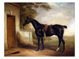 Portrait of Buckle, First Lord Chesham's Hunter, 1836 Giclee Print by Henry Thomas Alken