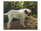 A Bulldog on a Garden Path Giclee Print by Cecil Aldin
