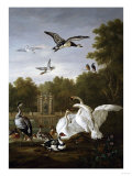 Swans, Ducks and Other Birds in a Park Giclee Print by Giovanni Battista Benvenuti