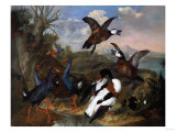 Shell Ducks and Other Fowl in a Landscape, 1720 Prints by George Wesley Bellows