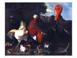 A Hen, Rooster, and Turkey in a Farmyard Giclee Print by Adler & Sullivan