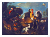 A Turkey, Duck, Rooster, Guinea Pig, and Rabbit by a Brass Urn, Genoese School, 18th Century Giclee Print by Adler & Sullivan