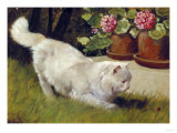 A White Persian Cat with a Ladybird Giclee Print by Cecil Aldin