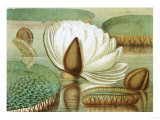 Victoria Regia or the Great Water Lily of America (Opening Flower), 1854, Publishers Impression giclée par Mary Cassatt