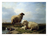 Sheep and Ducks in a Landscape Reproduction proc&#233;d&#233; gicl&#233;e par Leon Bakst