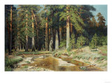 The Mast-Tree Grove, Study Print by Ivan Ivanovitch Shishkin