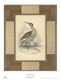 Marshland Bittern Prints by Alastair Reynolds