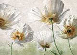 Raggi di Sole Poster af Eva Barberini