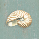 Nautilus Print by Lisa Danielle
