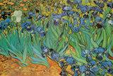 Garden of Irises (Les Irises, Saint-Remy), c. 1889 Foto van Vincent van Gogh