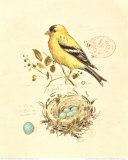 Gilded Songbird II Plakaty autor Chad Barrett