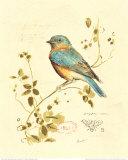 Gilded Songbird IV Kunstdruck von Chad Barrett