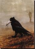 Krahe Stretched Canvas Print by Rudi Hurzlmeier
