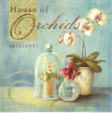 House of Orchids Prints by Angela Staehling