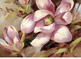 Magnolia Whisper Art by Brent Heighton