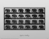 Elephant Walking Masterprint by Eadweard Muybridge