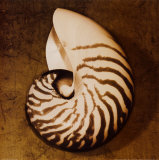 Nautilus Mounted Print by Caroline Kelly