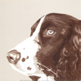 Springer Spaniel Prints by Emily Burrowes
