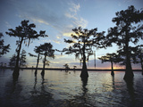 Cypress Trees in Grand Lake are Silhouetted Against a Sunset Sky Photographic Print by John Eastcott & Yva Momatiuk