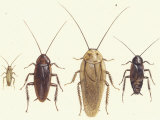 Close Views Illustrate Various Parts of a Cockroach Giclee Print by Paul M. Breeden