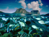 Damselfish and Sunset Wrasses Swim Above a Reef Photographic Print by David Doubilet