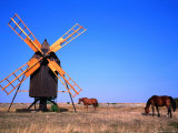 Horses Graze Near Windmill, Oland, Kalmar, Sweden Photographic Print by Christer Fredriksson