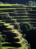 Rice Terraces, Ifugao Province, Luzon, Southern Tagalog, Philippines Fotografie-Druck von John Elk III