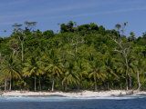 Heavily Palm-Tree Forested Mentawai Islands, Indonesia Photographic Print by Paul Kennedy