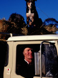 Farmer in Ute with Dogs, Mansfield, Victoria, Australia Photographic Print by Michael Coyne