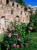 Roses in Garden at Aya Sofia 9Th Century Church Ruin, Iznik, Bursa, Turkey Photographic Print by John Elk III