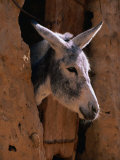 Donkey in Old Town, Siwa, Egypt Photographic Print by John Elk III