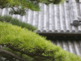 Tile Roof Top and Pines Inside the Otemon Gate to the Imperial Palace, Tokyo, Kanto, Japan Photographic Print by Brent Winebrenner