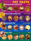 Fat Facts Láminas