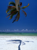 Horizontal Palm Tree and Its Shadow on White-Sand Bweju Beach, Zanzibar, Tanzania Fotografisk tryk af Greg Elms