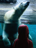 Polar Bear at San Diego Zoo, San Diego, California Photographic Print by Mark Newman