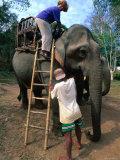 Elephant Ride, Bolaven Plateau, Champasak, Laos Photographic Print by John Elk III