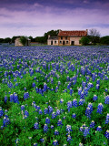 Field of Blubonnets, Marble Hill Area, Texas Lámina fotográfica por Cummins, Richard