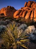 Hidden Valley, Joshua Tree National Park, California Fotografisk tryk af John Elk III