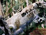 Wreck of Betty Japanese Bomber in Jungle, Rabaul, East New Britain, Papua New Guinea Photographic Print by Oliver Strewe